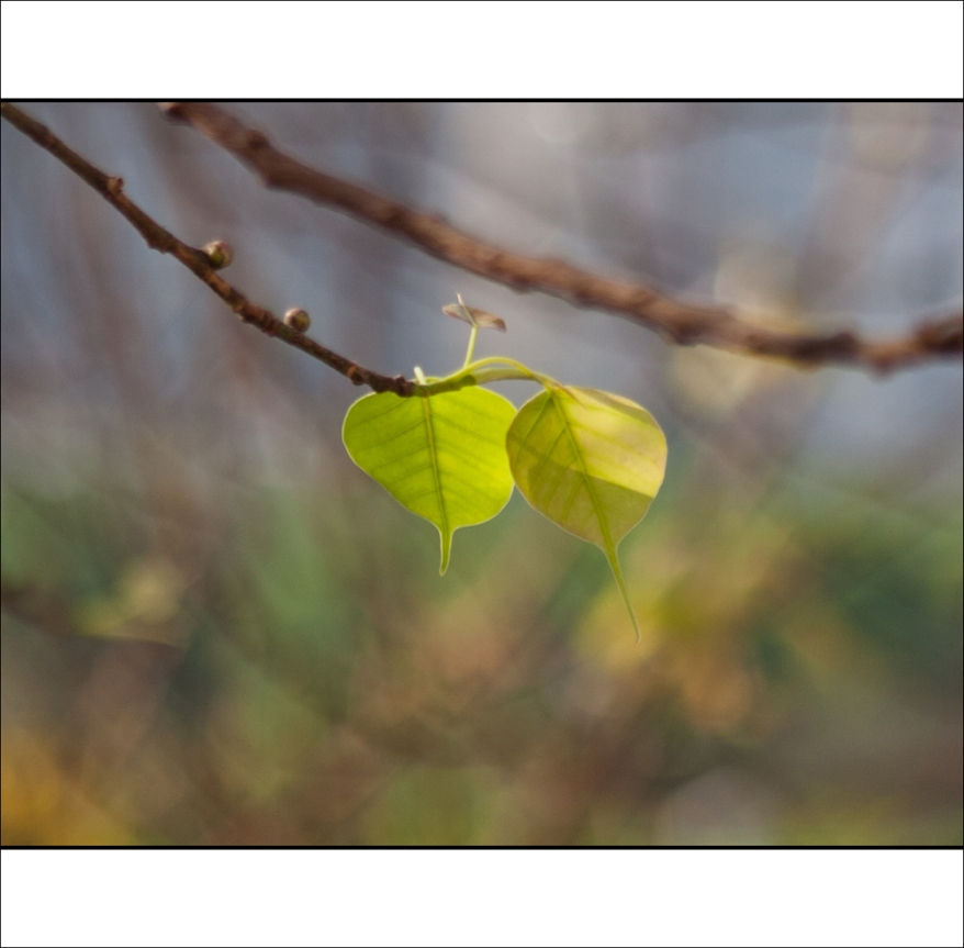 ghosttree_02