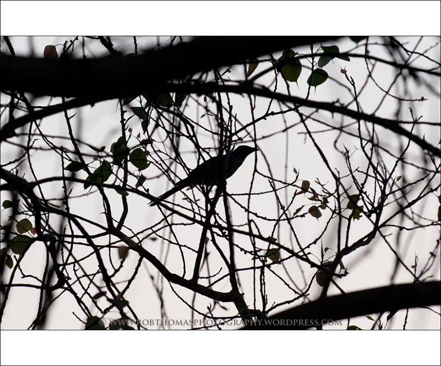 ghosttree_09
