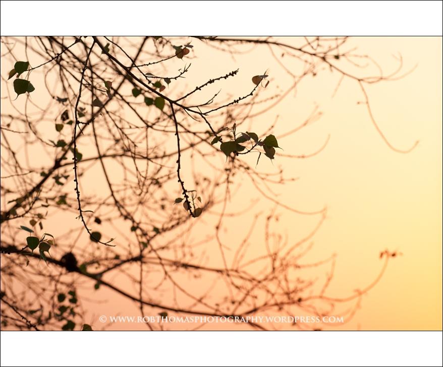 ghosttree_11