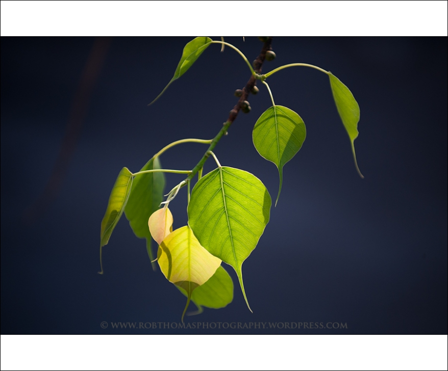 ghosttree_15