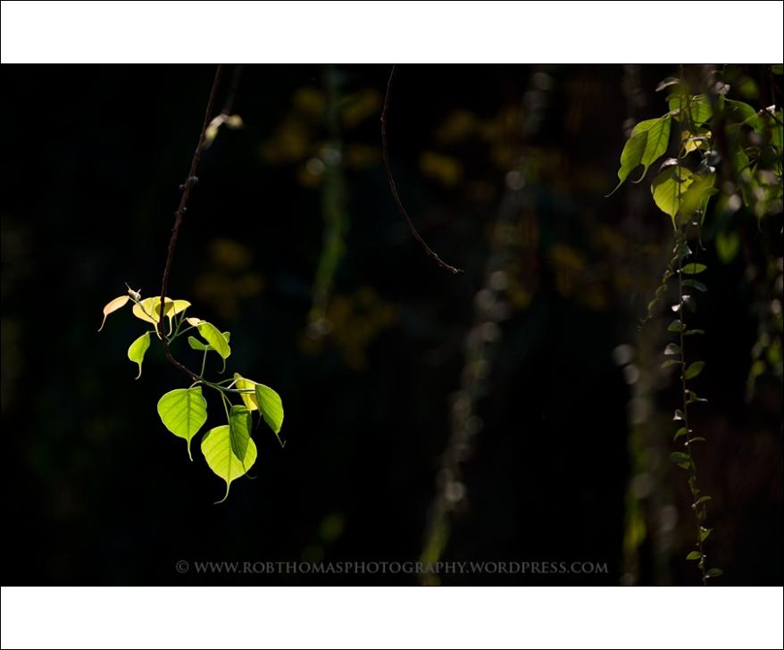 ghosttree_16