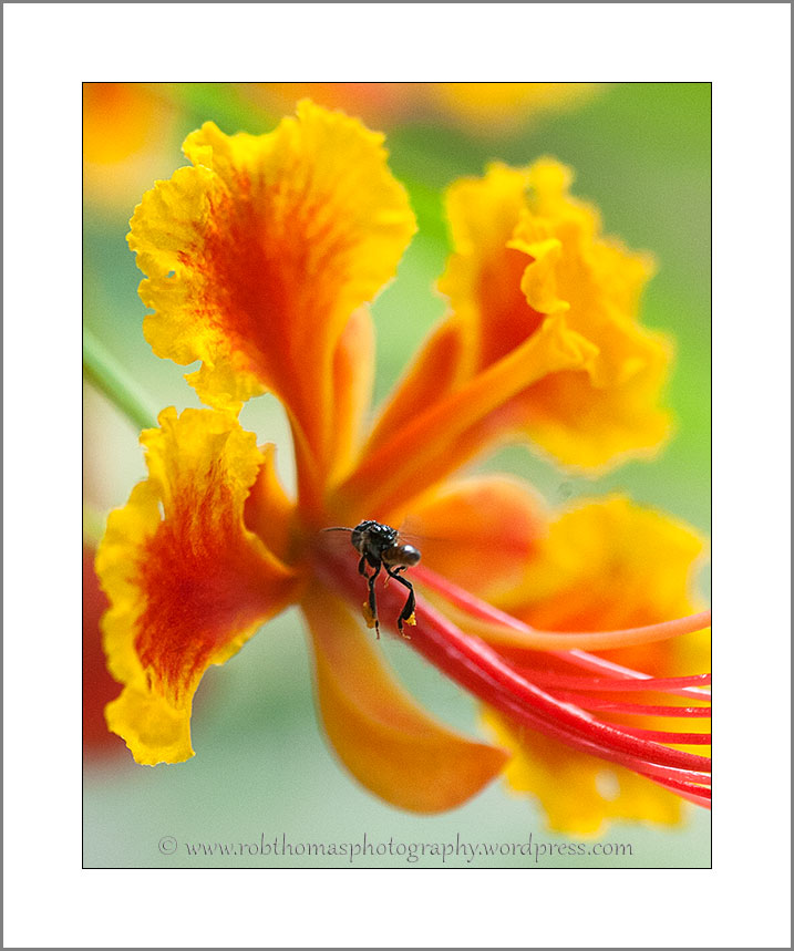flower_bee_01