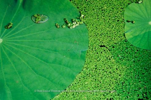 shanghai_2006_web-131