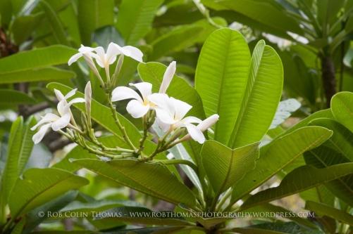 mbc_flora_150618-0109
