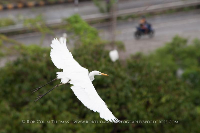 monsoon_150614-0221
