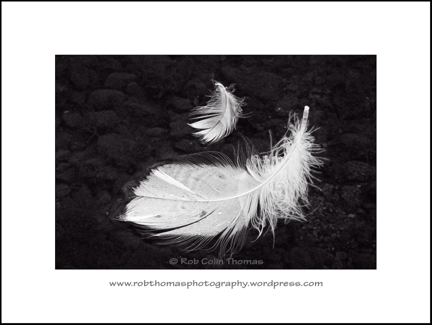 feathers_02