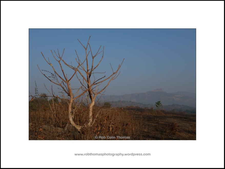 aasrewadi_landscape_01