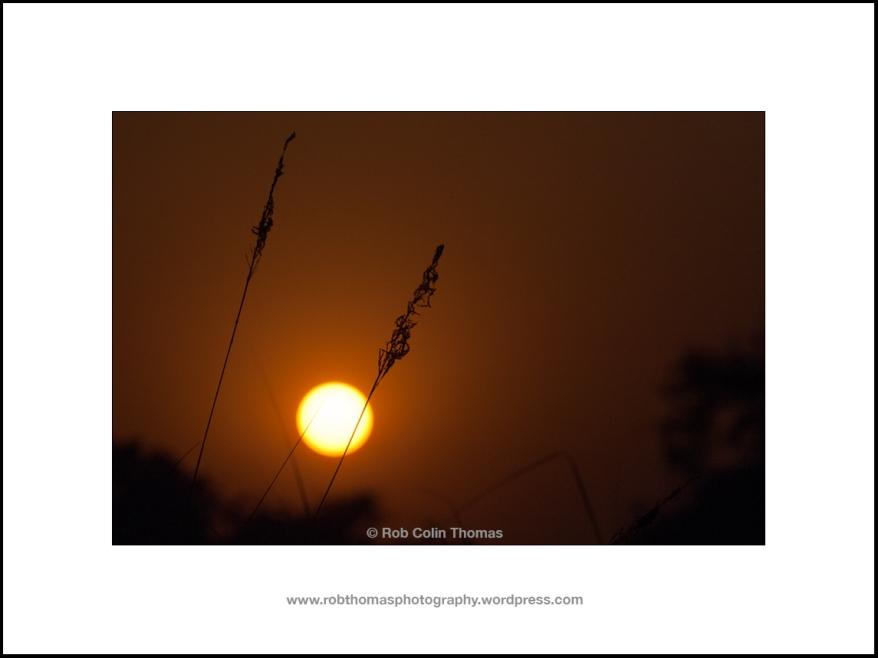 aasrewadi_sunset