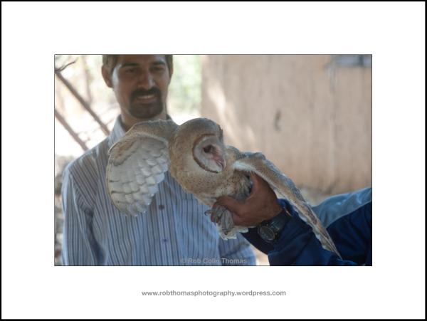 barn_owl_06