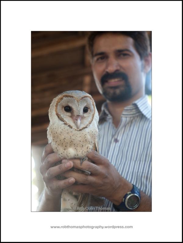 barn_owl_10