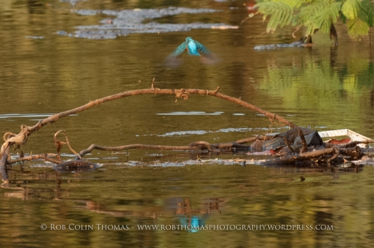 kingfisher_160124web-102