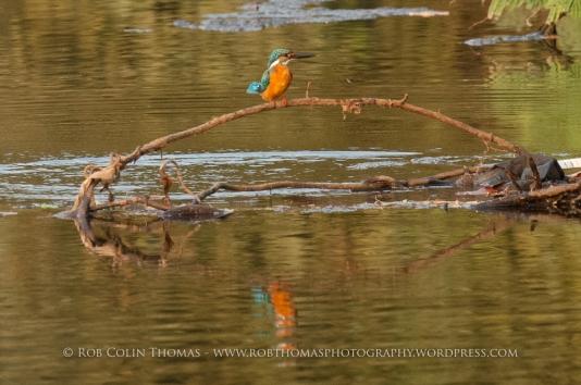kingfisher_160124web-105