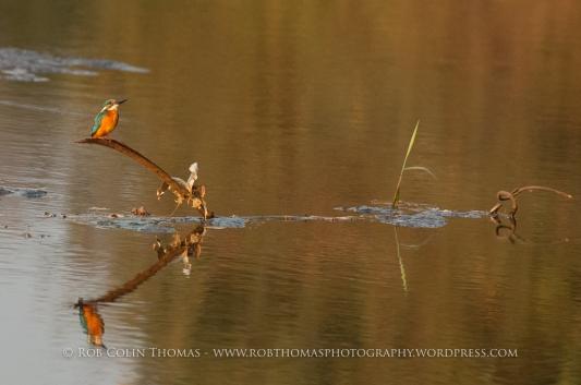 kingfisher_160124web-106