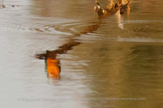 kingfisher_160124web-107