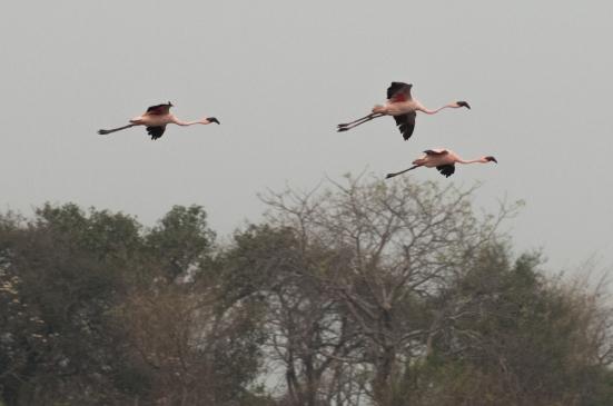 FlamingoLand_160505100