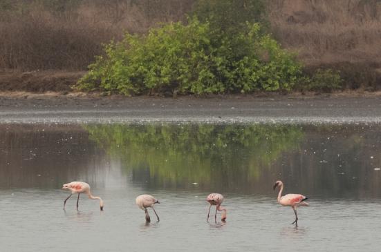 FlamingoLand_160505101