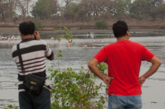 FlamingoLand_160505102
