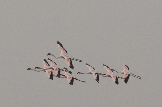 FlamingoLand_160505106