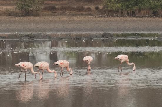 FlamingoLand_160505107