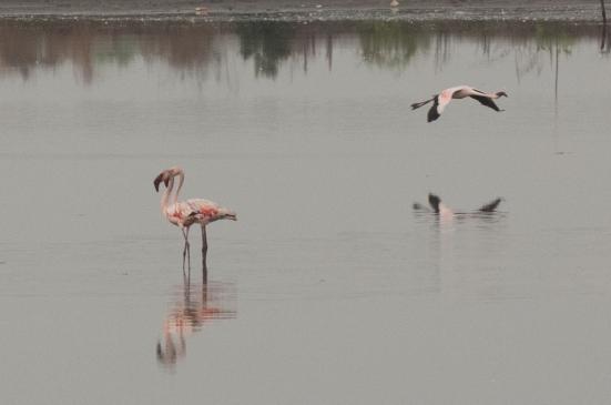 FlamingoLand_160505111