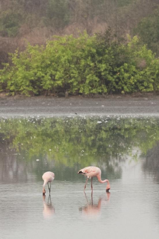 FlamingoLand_160505112