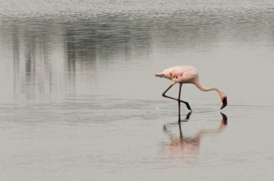 FlamingoLand_160505113