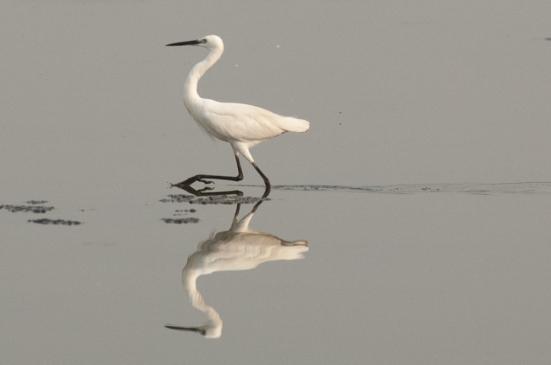 FlamingoLand_160505114
