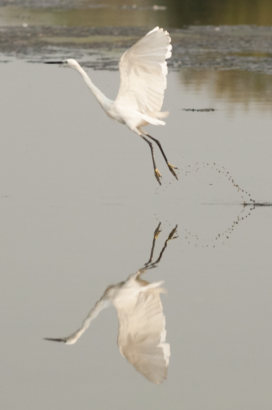 FlamingoLand_160505115