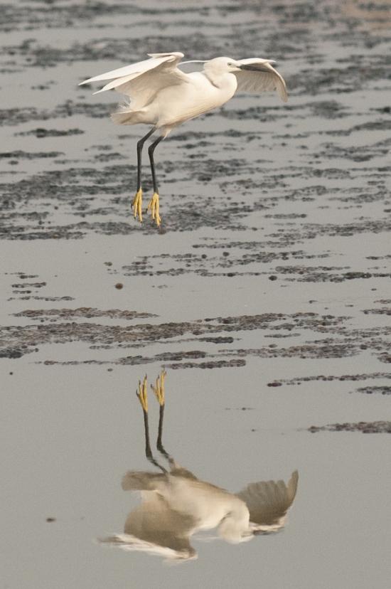 FlamingoLand_160505116