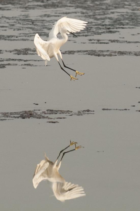 FlamingoLand_160505117