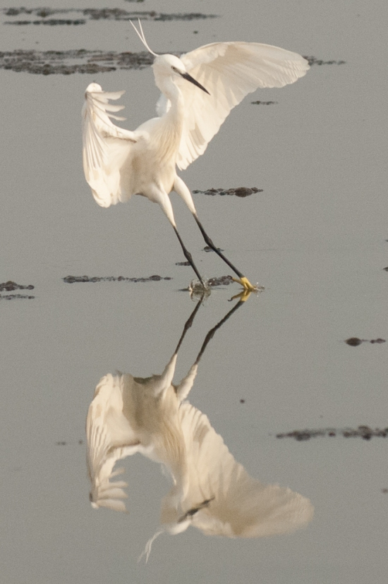 FlamingoLand_160505118