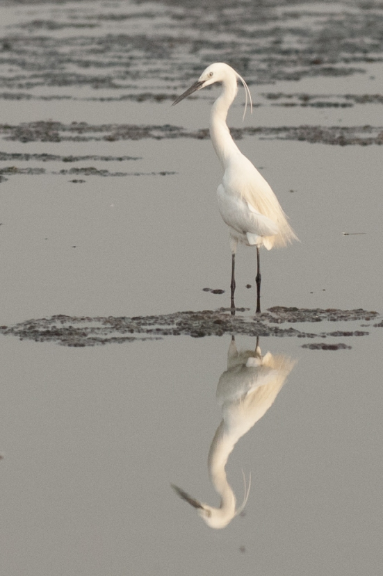 FlamingoLand_160505120