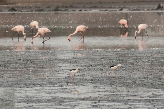 FlamingoLand_160505121