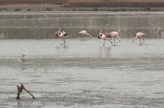 FlamingoLand_160505125