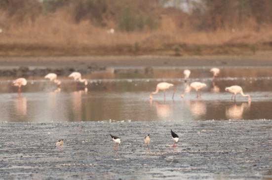 FlamingoLand_160505126