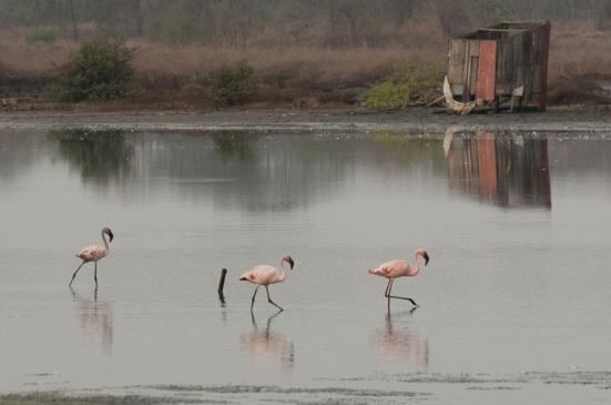 FlamingoLand_160505129