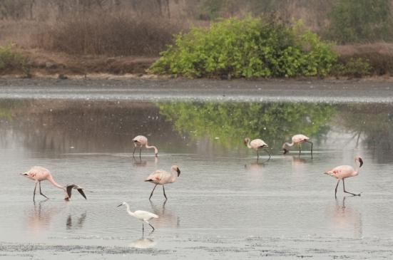 FlamingoLand_160505130