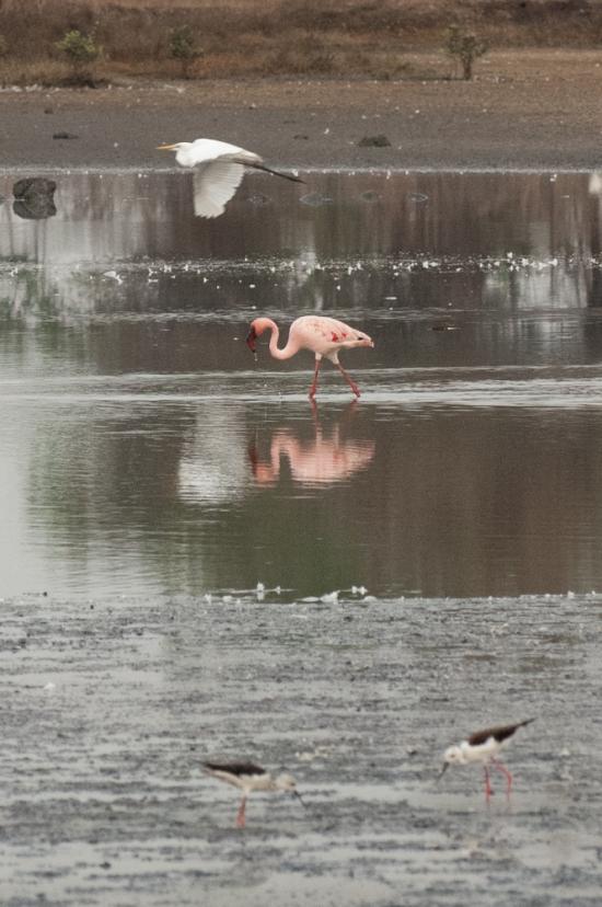 FlamingoLand_160505133