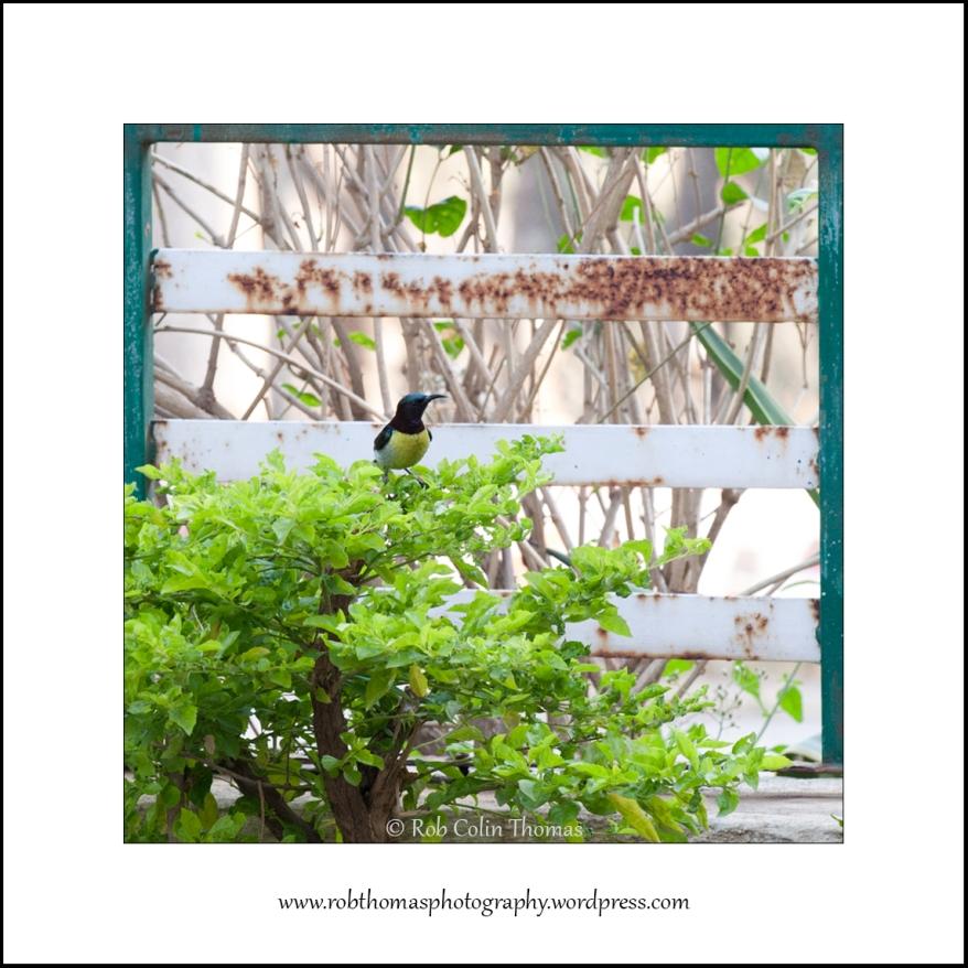 sunbird-01