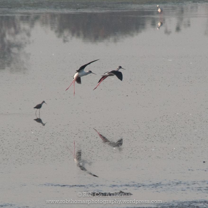 bird_dps_170304_0107