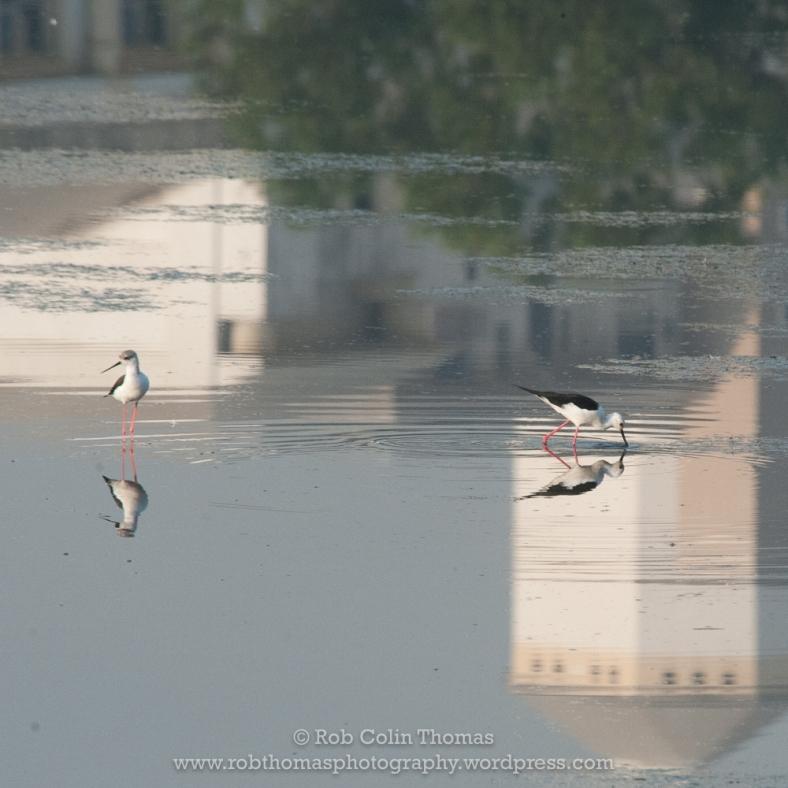 bird_dps_170304_0111