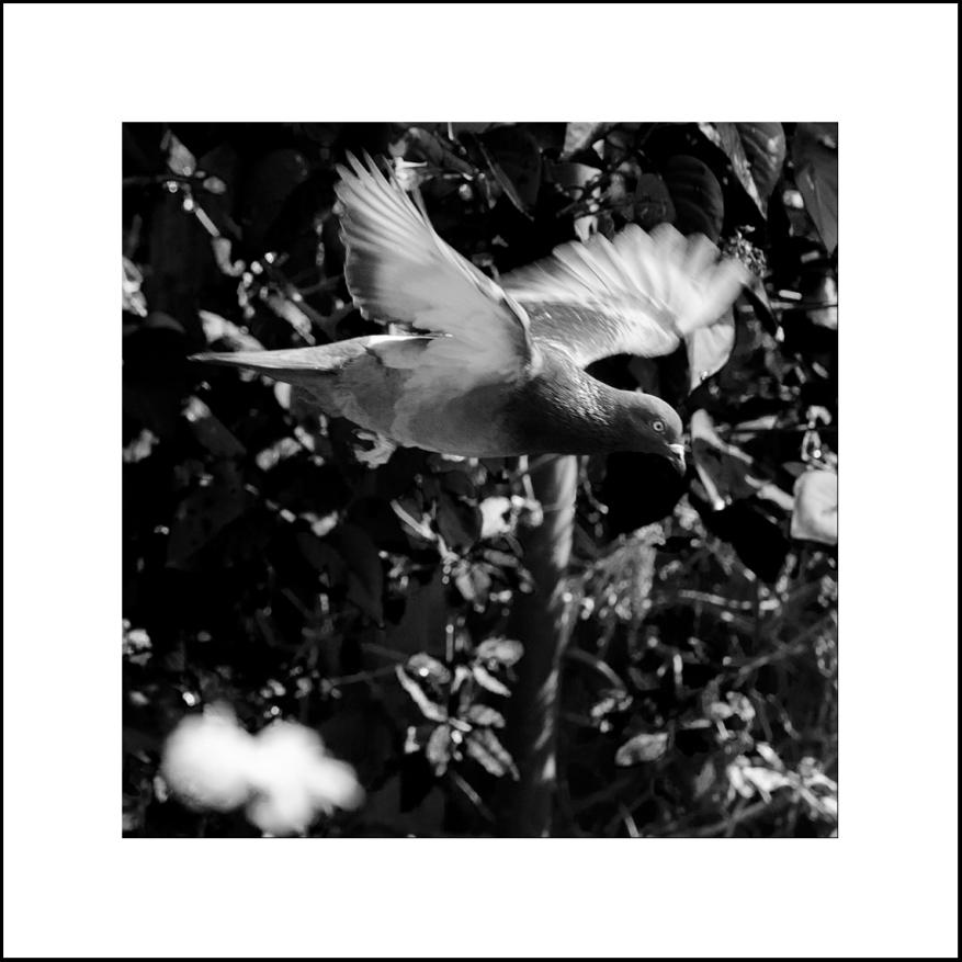 Ntm_Garden_July-147