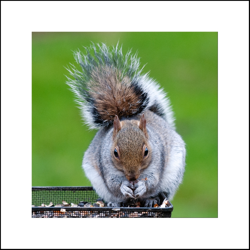 Squirrel_01