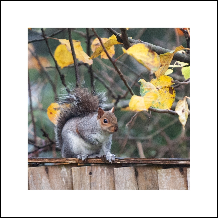 Squirrel_03