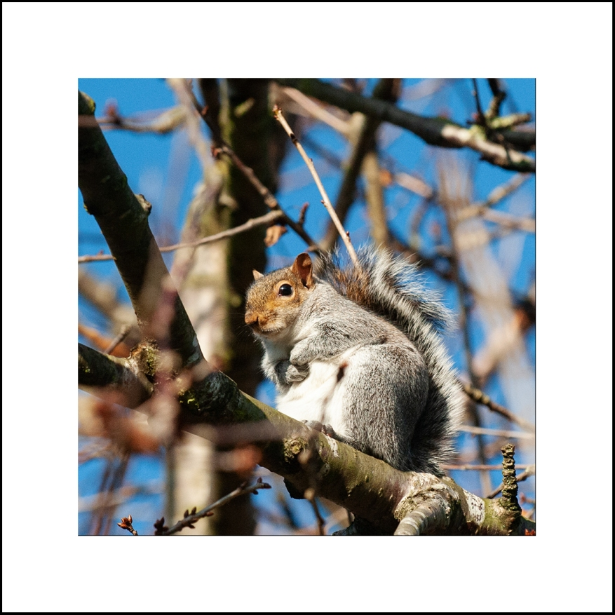 Squirrel_06