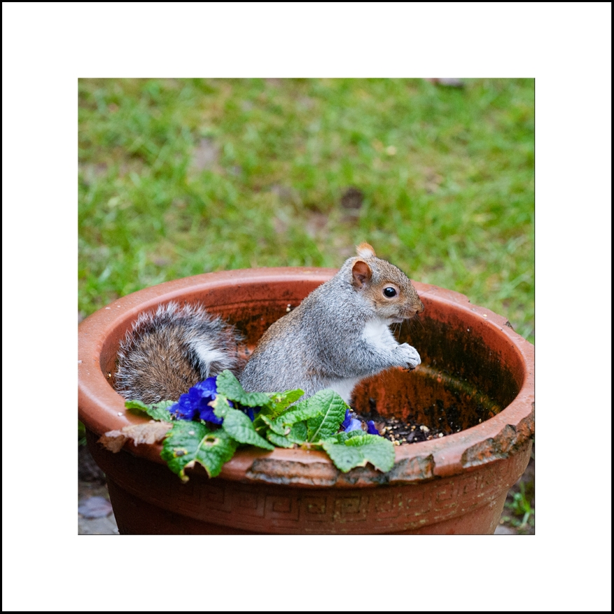 Squirrel_07