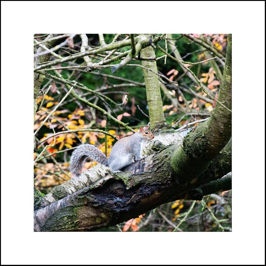 Squirrel_08