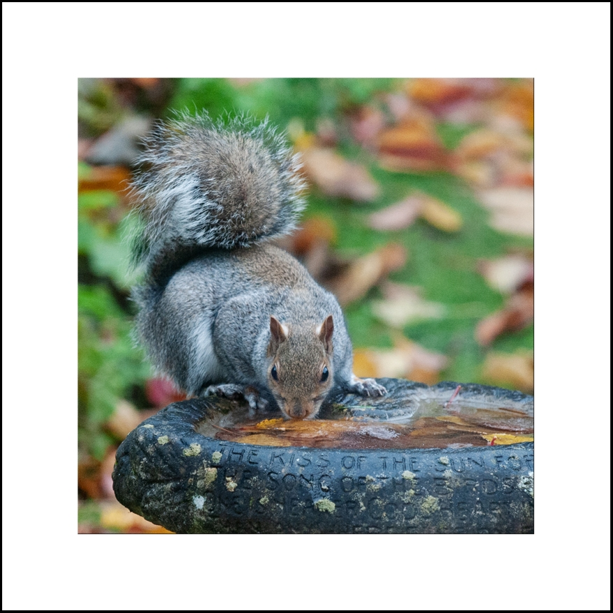 Squirrel_11